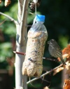Sams-bird-feeder-2.jpg